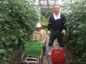 ミニトマト収穫体験 専業農家の三浦夫妻です、三浦さんはゆんたから歩いて五分のところでミニトマトと茄子を栽培してます。
